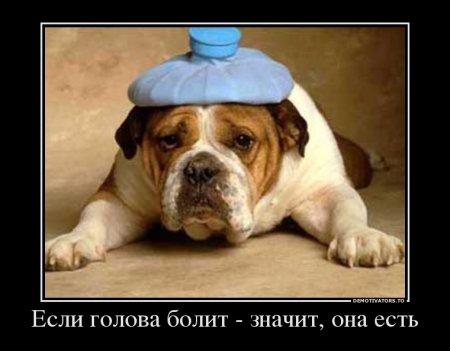 1346019627_782307_esli-golova-bolit-znachit-ona-est_demotivators_ru