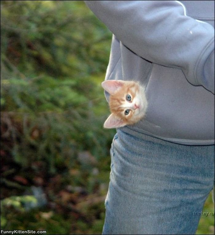 Pocket_Kitten