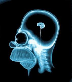 Правда ли, что современный человек использует только 10% своего мозга?