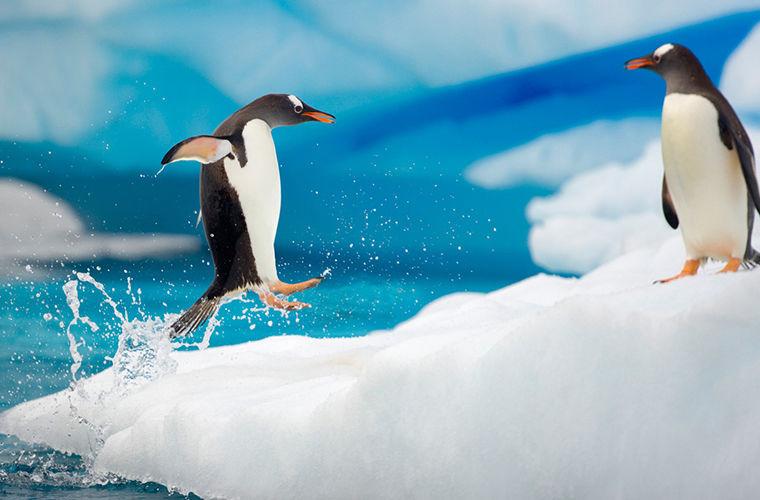 Антарктида - самая-самая
