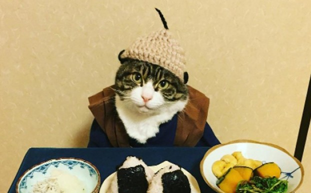 Самый терпеливый кот в мире - звезда Инстаграма