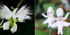 Обманчивые цветы