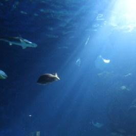Sea Life Aquarium -