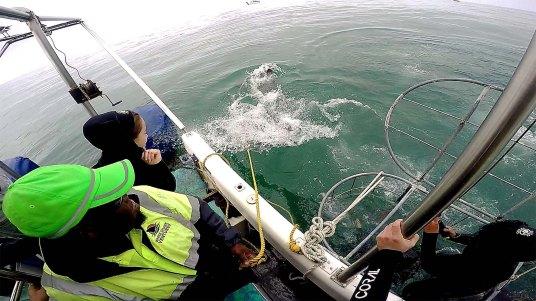 Mesmo de cima do barco dá pra sentir a força do tubarão!