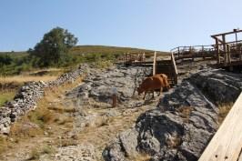 Vaquinhas passeando das Pedras Parideiras