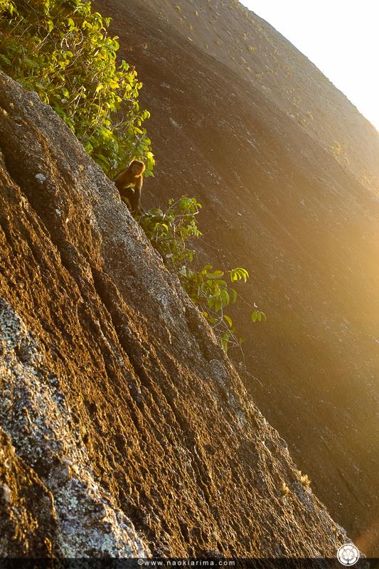 Macacos no cume do Totem.