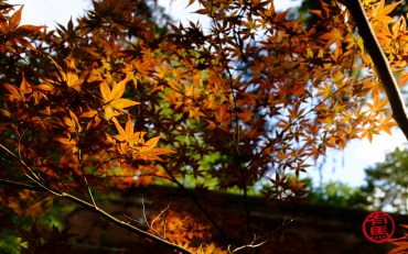 Chegada do outono.