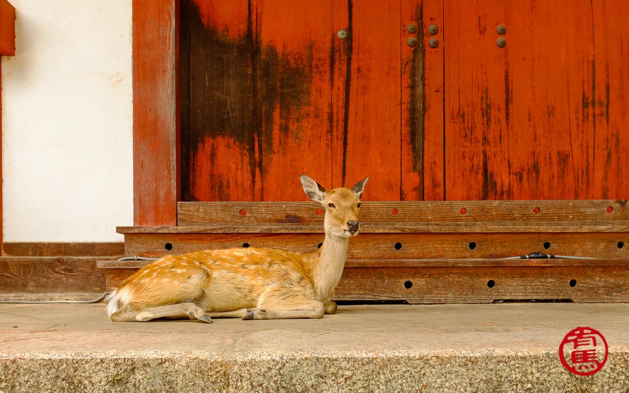Segundo os primórdios do budismo, os cervos eram considerados mensageiros dos deuses.