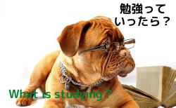 勉強っていったら?