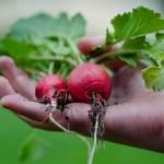 園芸療法はなぜ知られないのか・広まらないのか