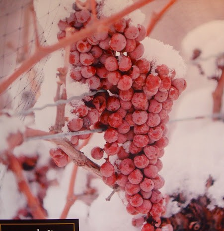 Ice wine – Vinho por quem entende de vinho