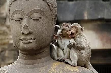 Monkey Mind – Como domesticar seus pensamentos saltitantes?