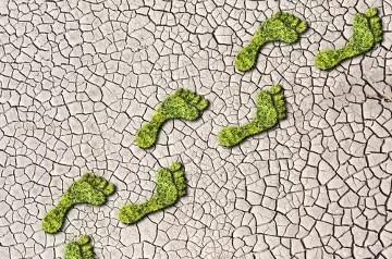 O que é pegada ecológica e como ter atitudes e consumo conscientes?