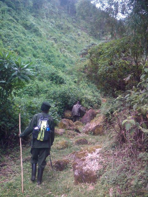 Gorge Walk1