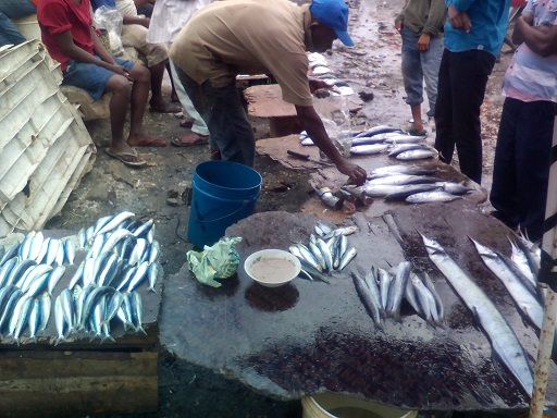 Zanzibar fish market6