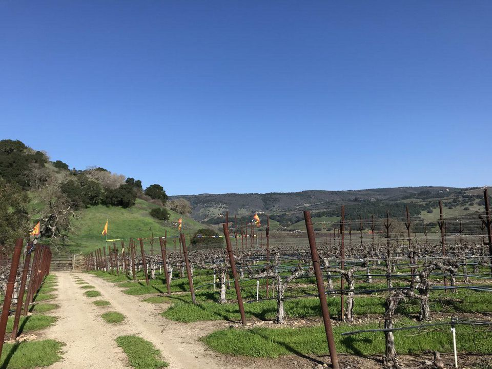 Gamble Family Vineyard land in Napa County's Oakville District