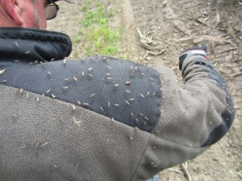 This photo was taken last year when the skeeters weren't so bad!