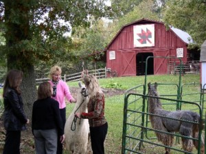 quilt barn in tennessee with llamas