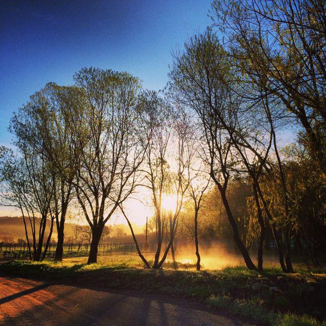 Morning Glow by Tim Carl