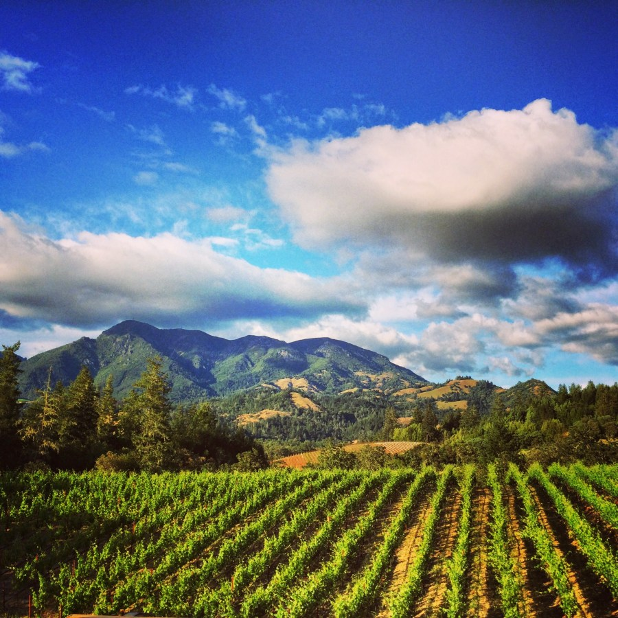 Mt. St. Helena From Knights Valley by Tim Carl