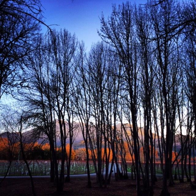 Mountain through trees by Tim Carl