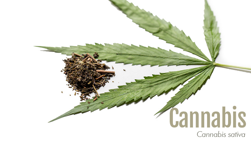Cannabis leaf with label