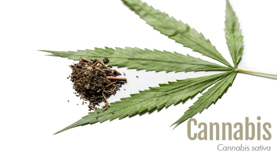 Cannabis leaf with label