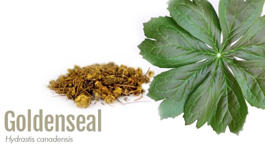 Goldenseal leaf with label