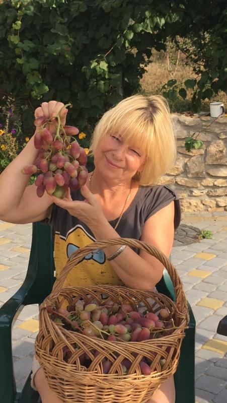 Виноградарь из Хмельницкого рассказала о сортах