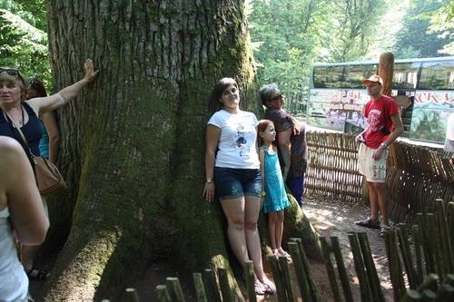 Магия деревьев: какое дерево для бабушки