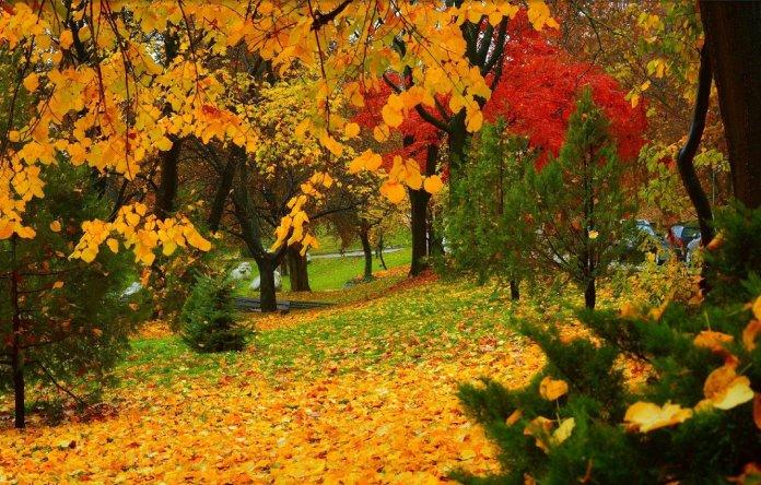 Погода в Україні на середу, 20 жовтня: іде потепління…
