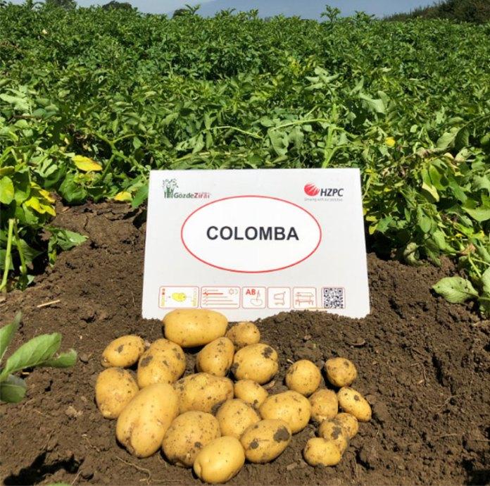 В Херсонской области планируют выращивать новый для Украины сорт картофеля