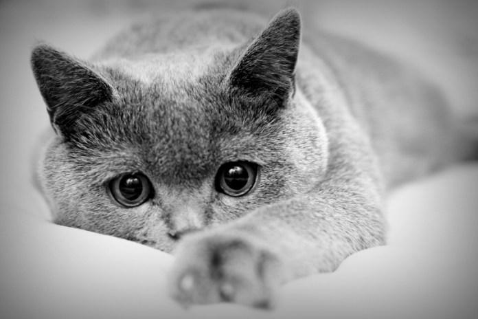 Кошки получат наследство от российской бабушки