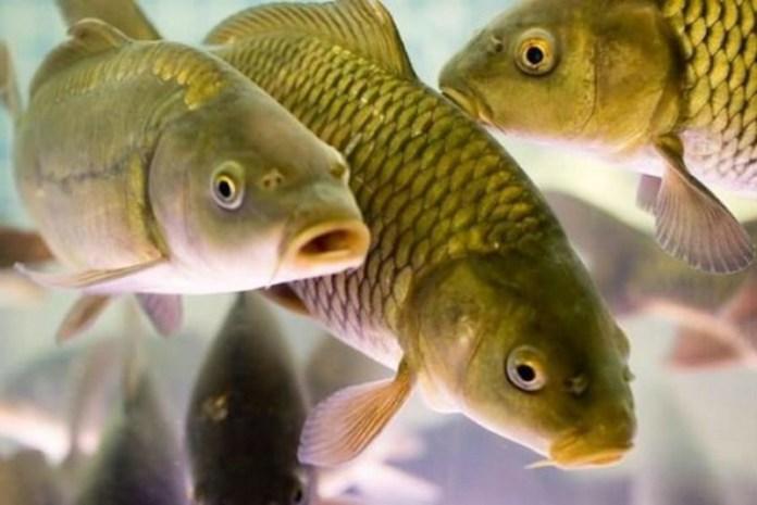 Покупаем рыбу по правилам