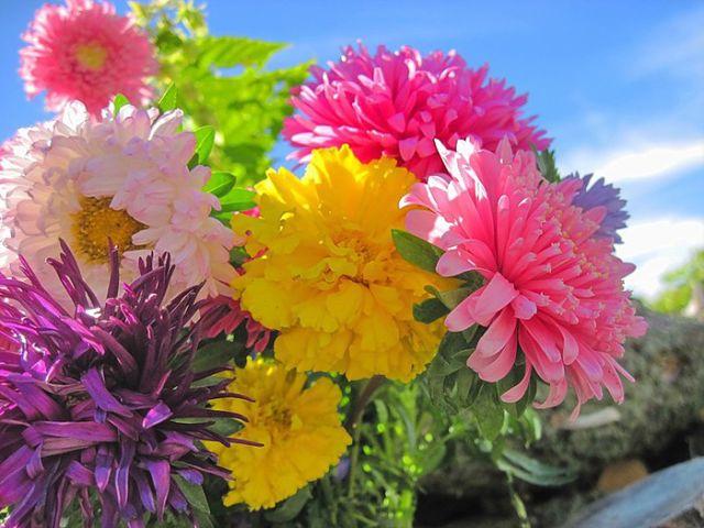 именины. осенние цветы