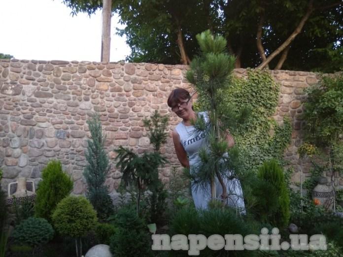 Садовод из Николаевской области превратила свой участок в хвойное царство