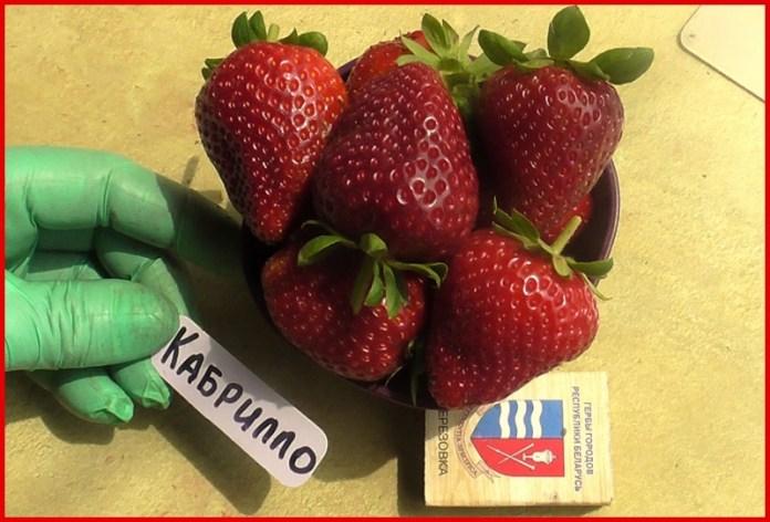 Садовод из Днепра назвала самые вкусные сорта клубники