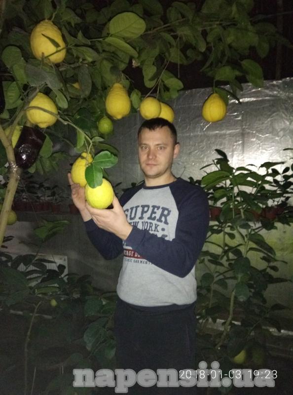 Одессит выращивает лимоны весом 1 кг и более