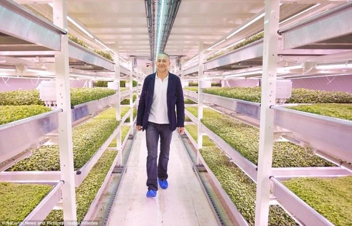 Бомбоубежище в Лондоне превратили в подземную ферму (ФОТО)