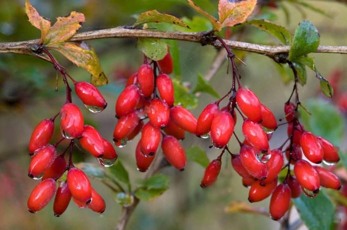 Лучшее декоративное растение для осеннего сада