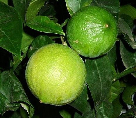 У мешканця Хмельниччини плодоносить бергамот