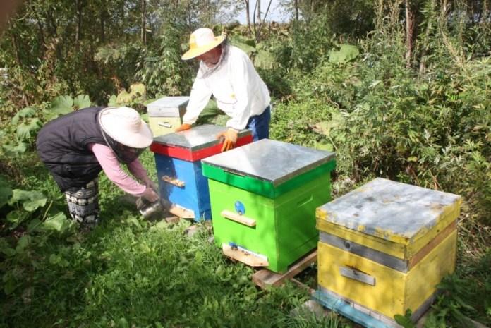 Жители Украины готовы променять огороды на пасеки