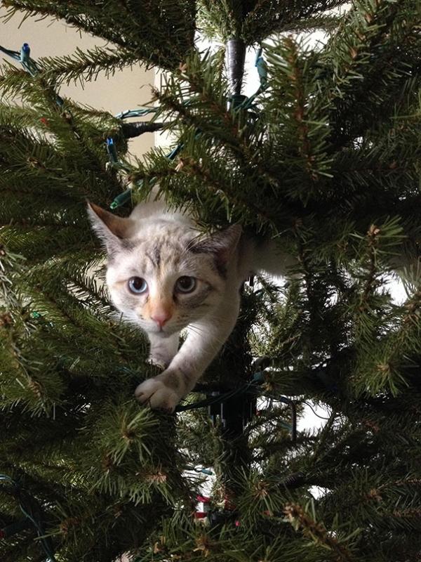 Кошки и елки: умиляясь картинкам не забывайте о безопасности (ФОТО, ВИДЕО)