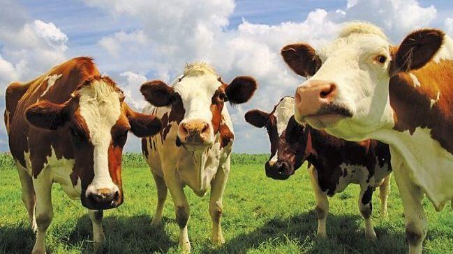 Как получить землю для сенокошения и выпаса скота