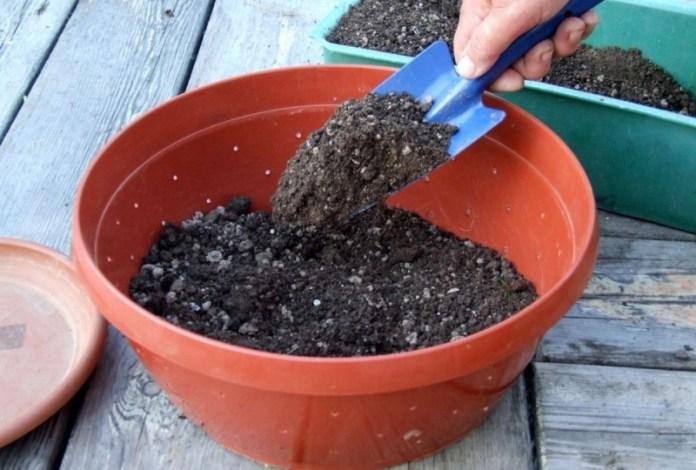 Способы обеззараживания грунта для рассады