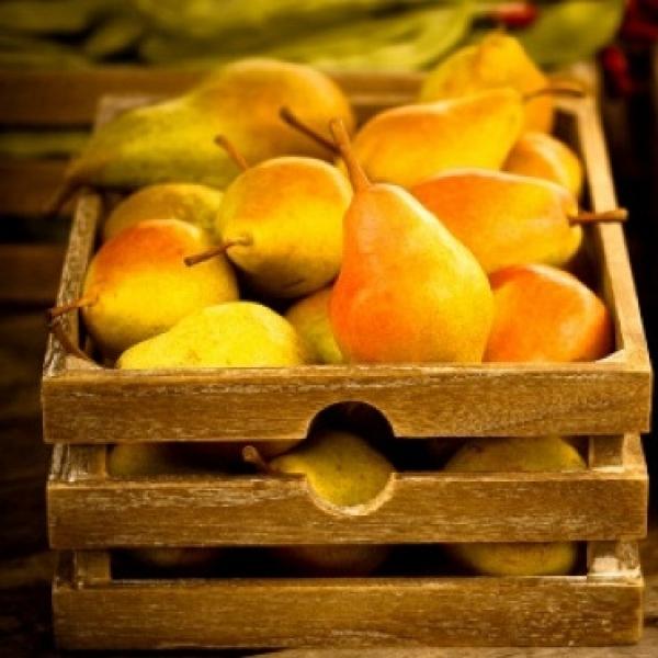 Как условия хранения влияют на качество плодов груши