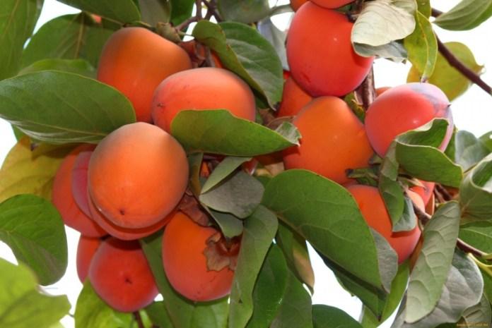 Какие плодовые культуры украинцы чаще всего высаживают нынешней весной?