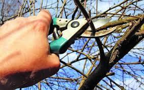Можно ли обрезать деревья осенью?
