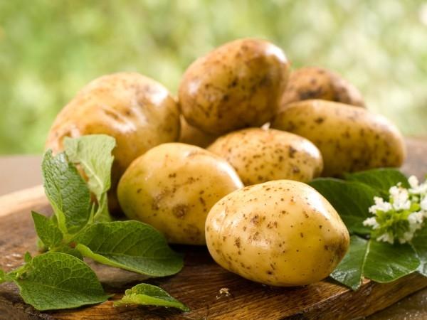 Простые агроприемы помогают на 10-15% увеличить урожай картофеля