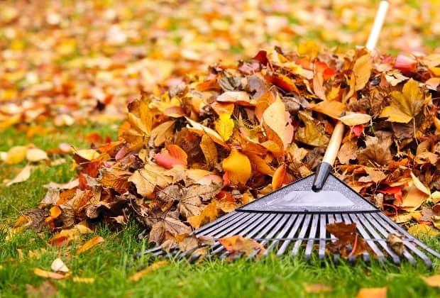 Стоит ли закладывать листья грецкого ореха в компост?